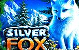 Silver Fox в казино на деньги